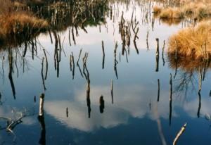 Spiegelung Moor