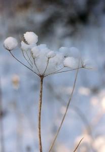 WinterSehnsucht