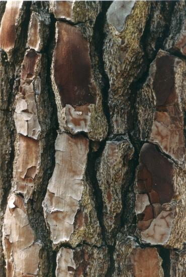 Baum 4 75