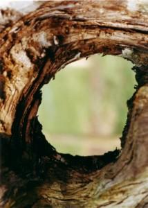Baum Blick-Loch