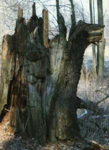 Baum-Bruch