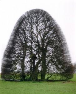 Baum 5 75